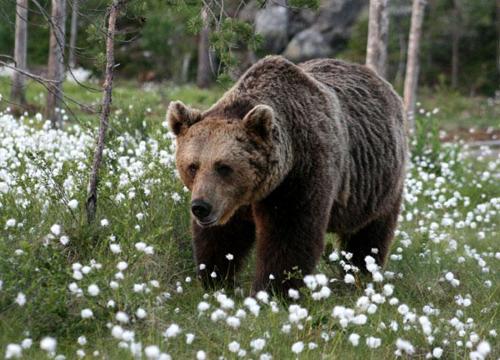 Experience wildlife