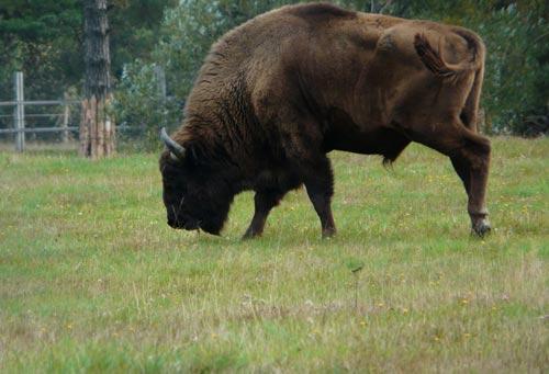 Vama Buzaului - Natural Reservation