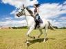 Brasov Horse Rides